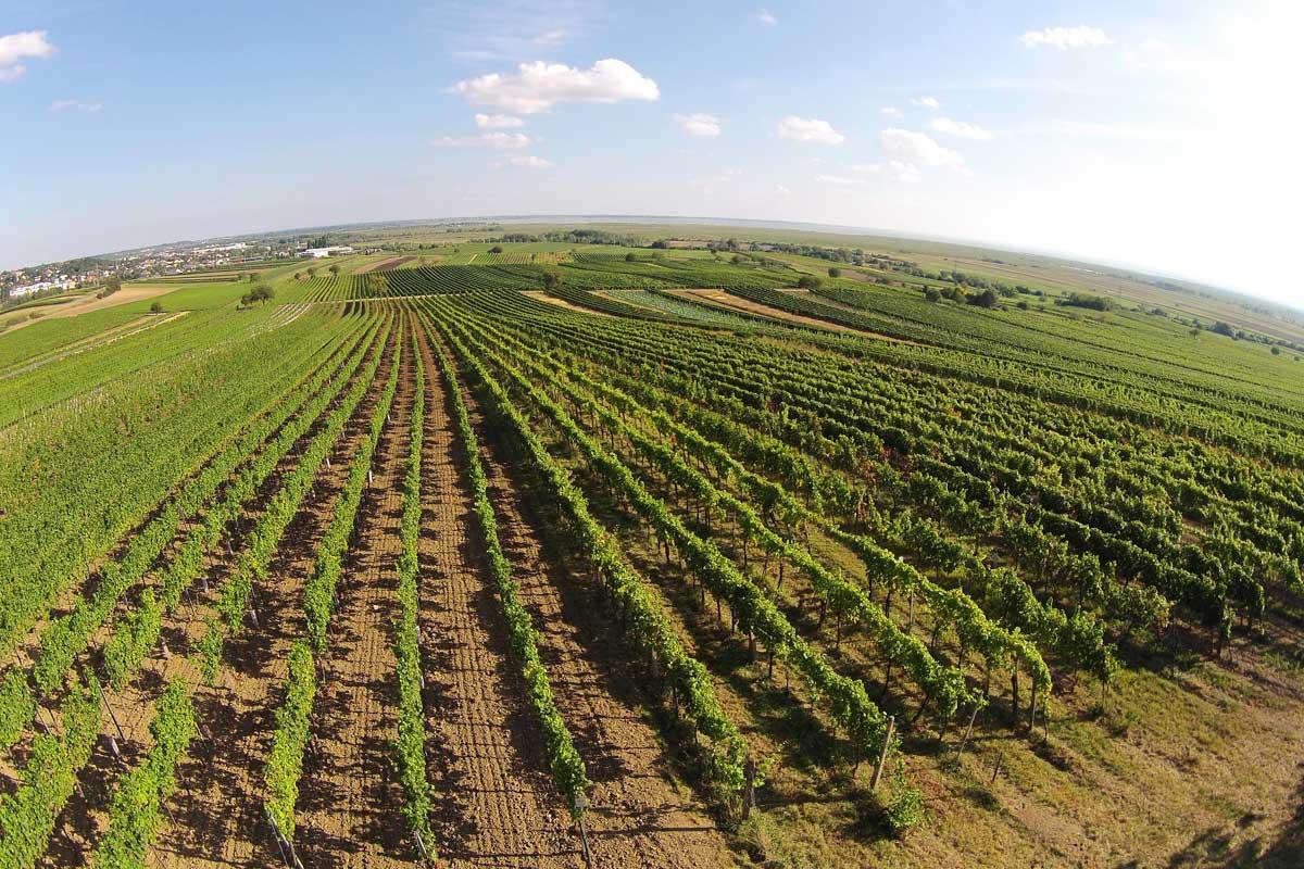 Drohnenaufnahme unseres Weingartens in der Region Neusiedler See